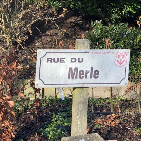 Merle de Kreuk ERC