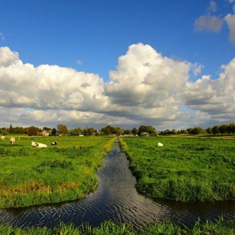 Hollands landschap - POP3
